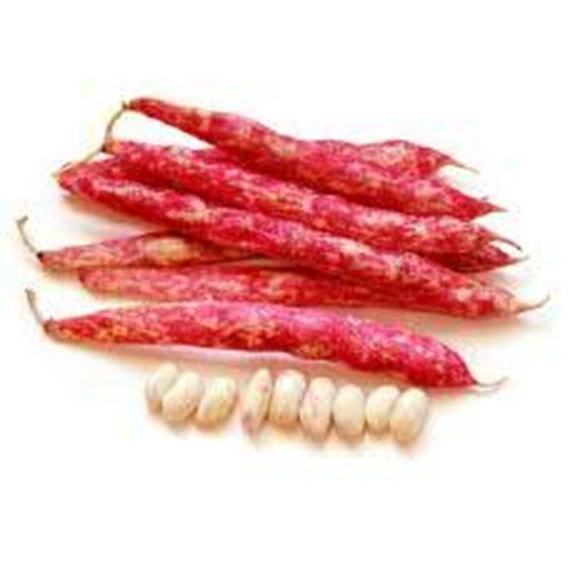 Picture of Borlotti Beans  per 150g bunch