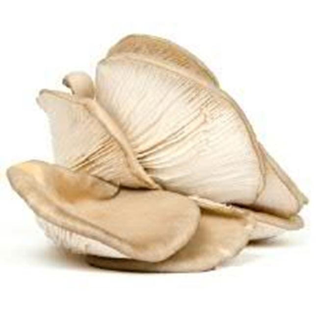 Picture of Mushroom, Oyster per 150g