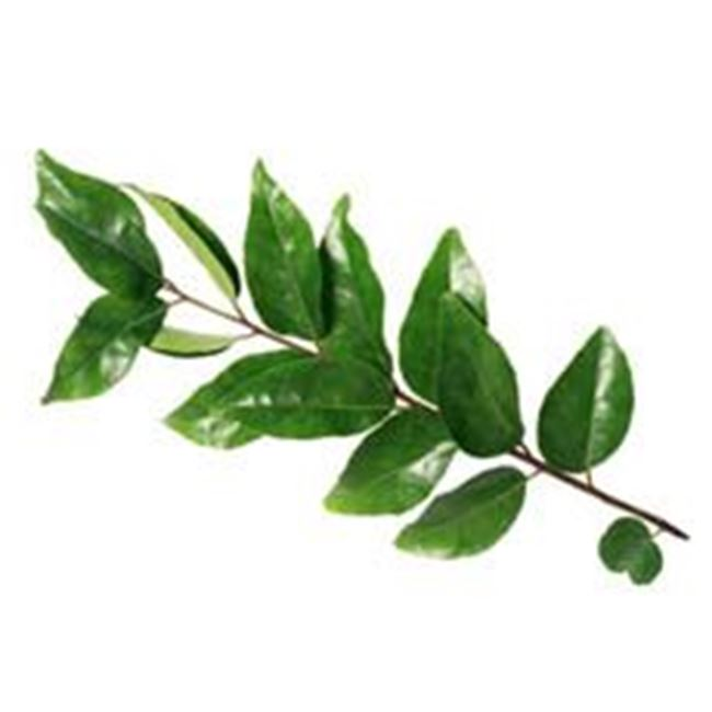 Picture of Curry Leaves per 15g