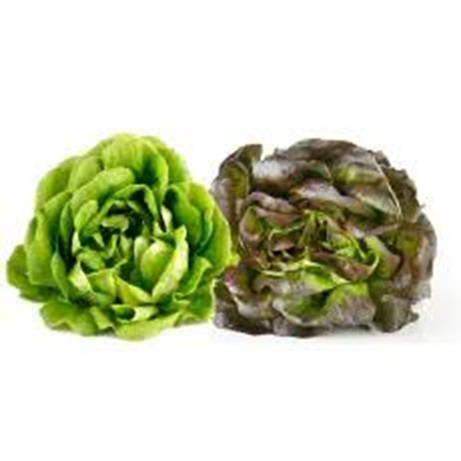 Picture of Lettuce Salanova per 2pk (red and green)