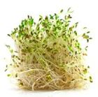 Picture of Alfalfa Sprouts per punnet (120g)