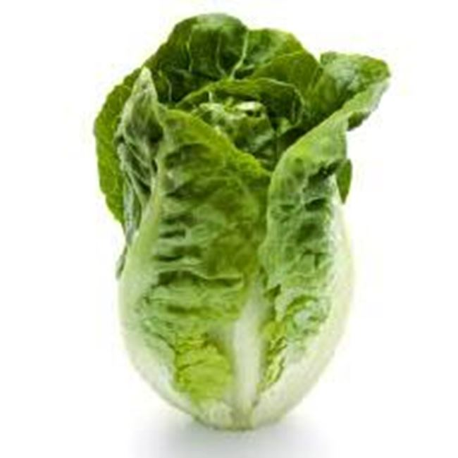 Picture of Lettuce Baby Cos each