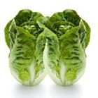 Picture of Lettuce Baby Cos Twin Pack each