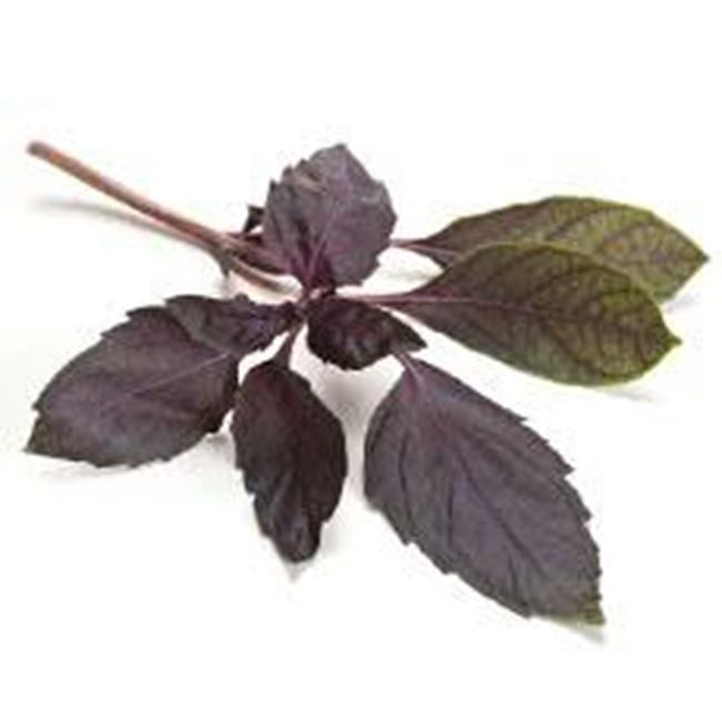 Picture of Thai Basil per bunch